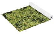 Dwarf Evergreen Yoga Mat