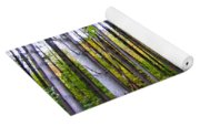 Fall Ivy In Pine Tree Forest Yoga Mat