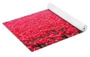 Fields Of Tulips Alkmaar Vicinity Yoga Mat