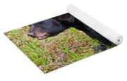 Florida Black Bear Yoga Mat
