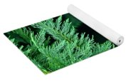Fronds Of The Leyland Cypress Yoga Mat