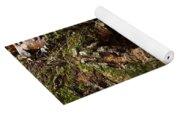 Fungus In Stump Hole Yoga Mat
