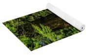 Giant Douglas Fir Trees Collection 3 Yoga Mat
