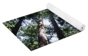 Giants Of The Forest Yoga Mat