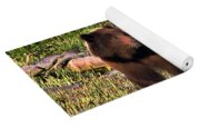 Grizzly Bear Yoga Mat