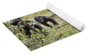 group of Common Chimpanzees running Yoga Mat