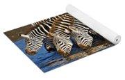Herd Of Zebras Drinking Water Yoga Mat