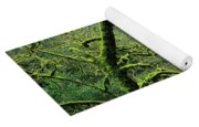 Mossy Trees Leafless In The Winter Yoga Mat