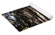 Redwood Forest  Yoga Mat