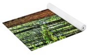 Redwoods 2 Big Basin Yoga Mat