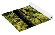 Reflecting On The Beauty Of The Woodlands Yoga Mat