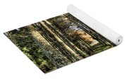 Shadows Of The Larch Forest Sunset No2 Yoga Mat