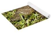 Florida Soft Shelled Turtle - Apalone Ferox Yoga Mat