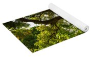 The Old Mango Tree Yoga Mat