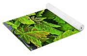 Vibrant Young Maples - Acer Yoga Mat