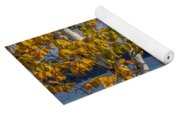 White Birch Tree In Autumn Along The Shore Of Crystal Lake Yoga Mat