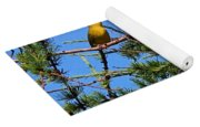 Yellow Bird In A Juniper Tree Yoga Mat
