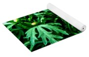 Yellow Flower Of Spring Yoga Mat