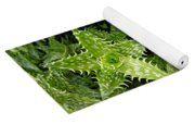 Young Aloe In Stereo Yoga Mat