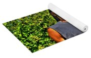 002 The Lion And Lioness Yoga Mat