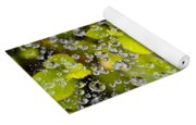 Closeup Of Morning Dew On Leaves Yoga Mat