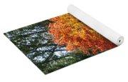 Fall Colored Tree Yoga Mat
