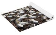 Gannet Colony Yoga Mat