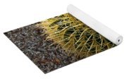 Gold Barrel Cactus   No 1 Yoga Mat