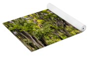 Louisiana Bayou Sunrise Yoga Mat