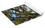Pine Tree And Rocks Yoga Mat