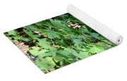 Shadows Of The Sweet Gum Yoga Mat