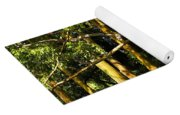 Stand Of Rainbow Eucalyptus Trees Yoga Mat