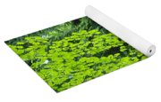 Umbrella Of Trees In Forest Yoga Mat