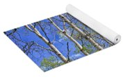 White Trees Against A Blue Sky Yoga Mat