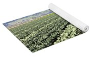 Young Broccoli Field For Seed Production Yoga Mat