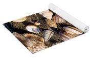 Mix Group Of Seashells Yoga Mat