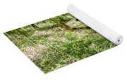 cypress forest and swamp of Congaree National Park in South Caro Yoga Mat
