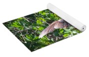 Anhinga In The Sun Yoga Mat