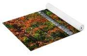 Aspens In Fall Forest Yoga Mat