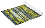 Autumn Through The Trees Yoga Mat