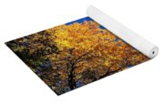 Autumn Yellow Foliage On Tall Trees Against A Blue Sky In Palermo Yoga Mat