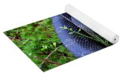 Blue Hognose Yoga Mat