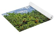 Dm6850-e Orange Grove And The Sierra Nevada Ca Yoga Mat