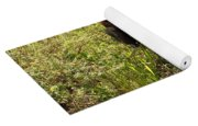 Everglades City Glamour 155 Yoga Mat