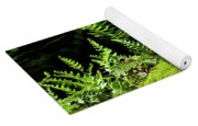 Ferns And Moss On The Ma At Yoga Mat