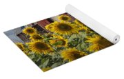 Golden Blooming Sunflowers With Red Barn Yoga Mat