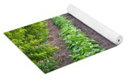 Intercropped Trees And Beans Yoga Mat