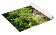 Jaguar Walking Through Muddy Shallows Towards Camera Yoga Mat