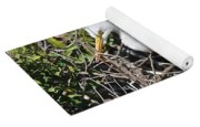 Nesting Great Egret With Chick Yoga Mat