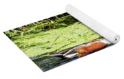 Northern Shoveler Drake Yoga Mat